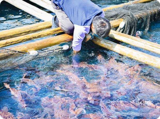 串本の美しい自然と魚に対する感謝の気持ちを忘れず、事業を通じて地元地域に貢献していく。