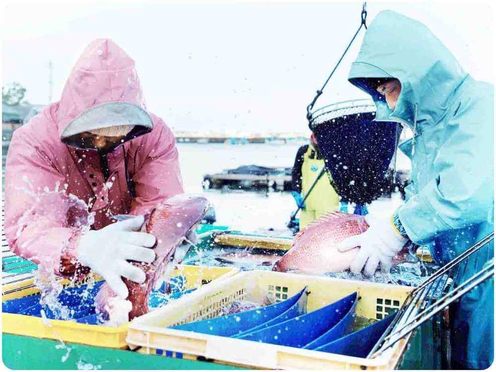 波が穏やかな串本湾内は、ファミリーでの釣りにおススメ!