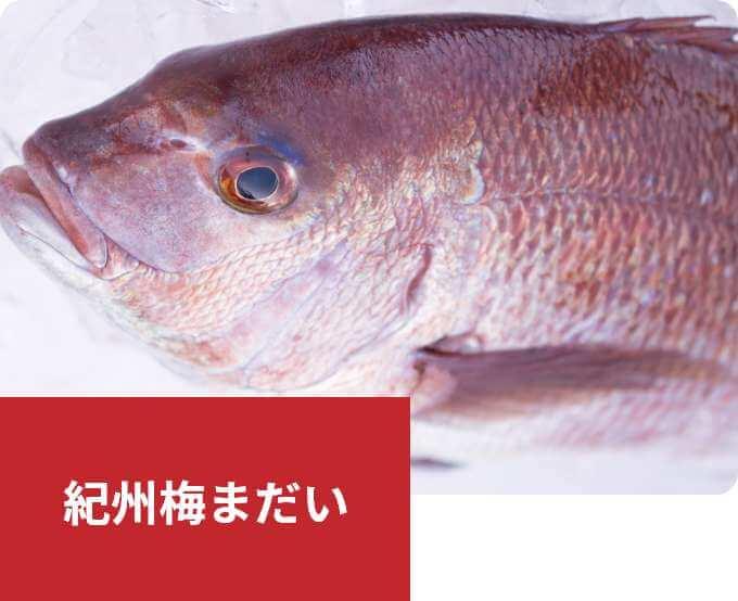 長年培った技術と経験が生んだ高品質の真鯛