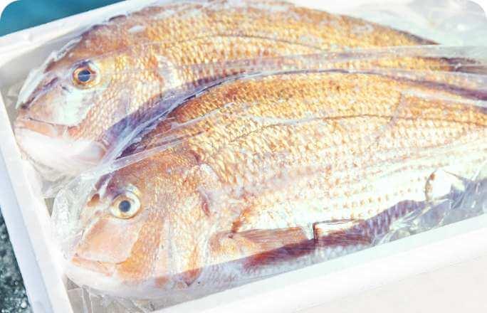 釣れた魚をご自宅へ配送!(有料)